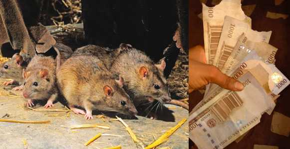 Man Reveals What Lagos Rat Did To His Money