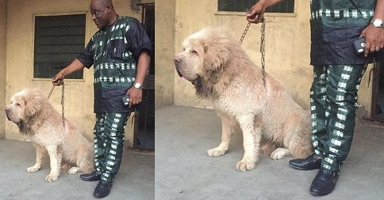RRS Commander Tunji Disu Shows Off His Huge Scary Dog