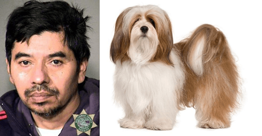 Man Rapes Dog Out Of Anger After Fiancee Ignored His Calls And Texts