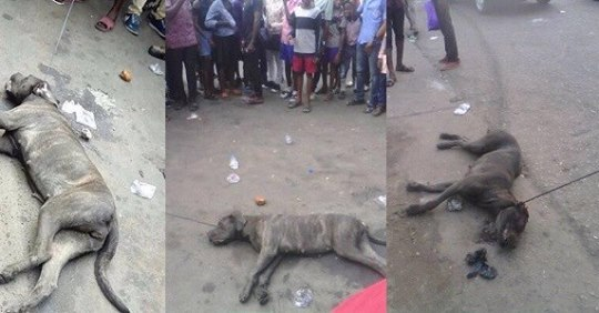 Man Allegedly Turns Into A Dog After Alighting From His Car, Yesterday In Port Harcourt