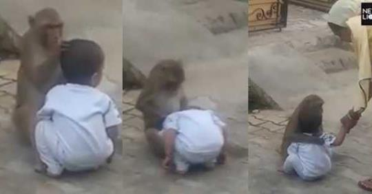 Monkey Kidnaps 2-year-old Boy From His Home So He Could Have Someone To Play With (Video)