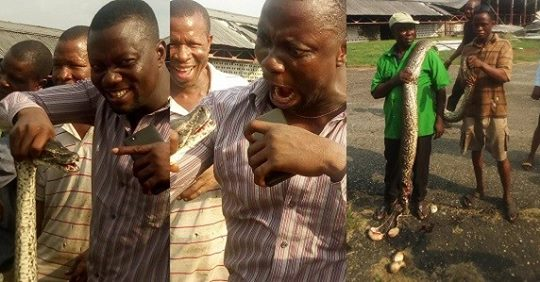 Residents Celebrate After Killing 12-foot Python Terrorizing Them In Delta State