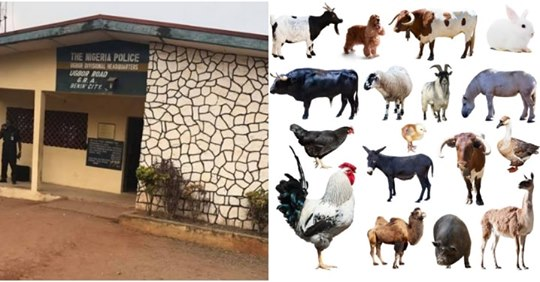 Police Receive List Of Animals To Sacrifice For Detaining Chief Priest In Benin City