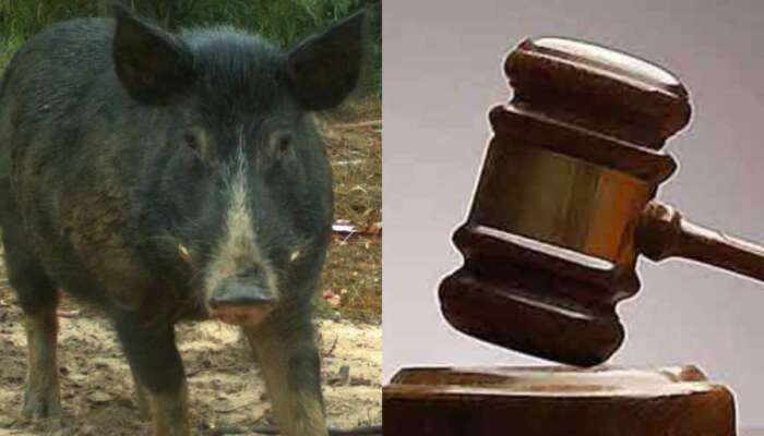 CRAZY!! Man In Court For Allegedly Having Sex With Pig In Ibadan