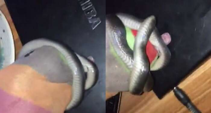"""""""Shey Them No Tell You The House Wey You Enter"""" – Nigerian Man Exchanges Words With A Snake He Captured With His Bare Hands In His Room (video)"""